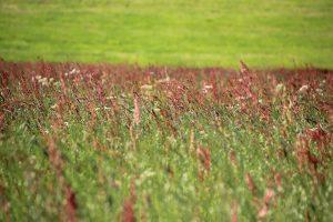 meadow-350379_640